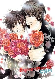 Смотреть аниме Лучшая в мире первая любовь OVA / Sekaiichi Hatsukoi OVA онлайн бесплатно